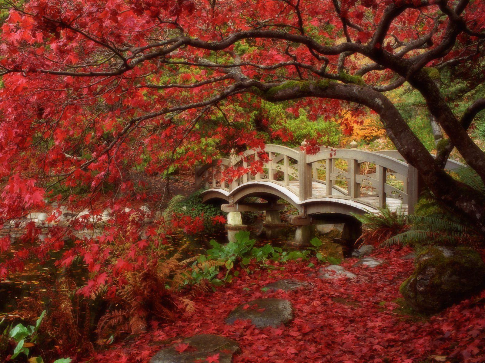 Güzel Japon Bahçesi Modeli