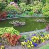 İlginç Bahçe Süs Havuzu Tasarımı