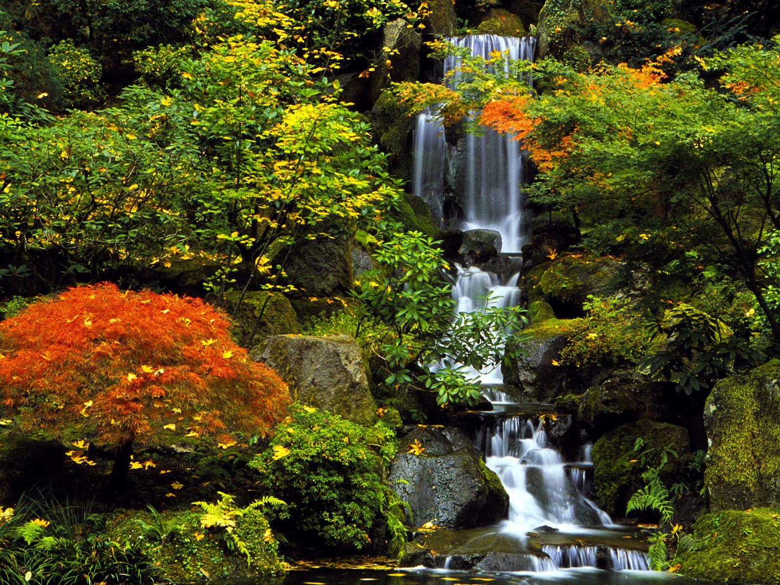 Modern Japon Bahçesi Örneği