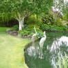 Yeni Bahçe Havuzu Dizaynı
